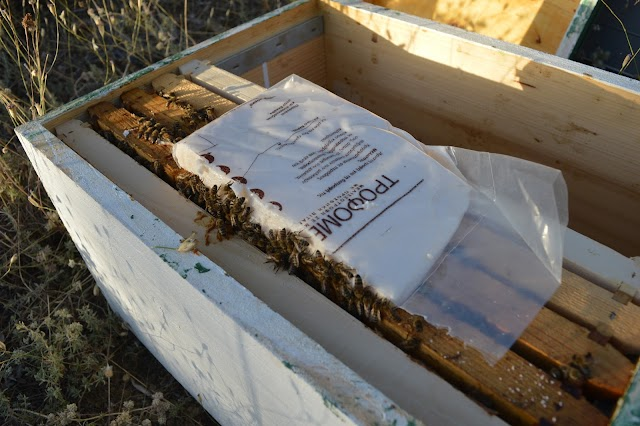 ΤΡΟΦΟΜΕΛ: Το top των μελισσοτροφών!