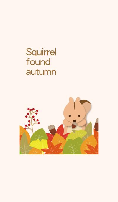 It is autumn! I found squirrel.