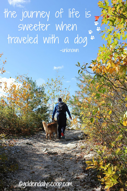 benefits of hiking with your dog #walktober #wordlesswednesday