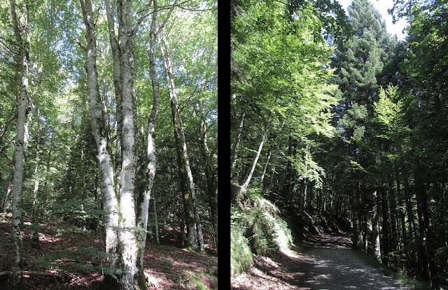 Casas de Irati - SL-NA-62A - Cascada del Cubo - Parque Nacional de Irati - Navarra