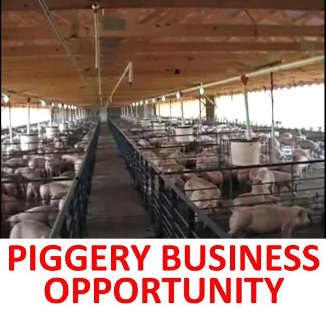 How Much Capital you Need to Start Making Money in a Piggery Business