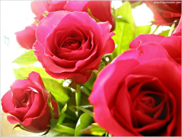 Rosas Regalo de San Valentín