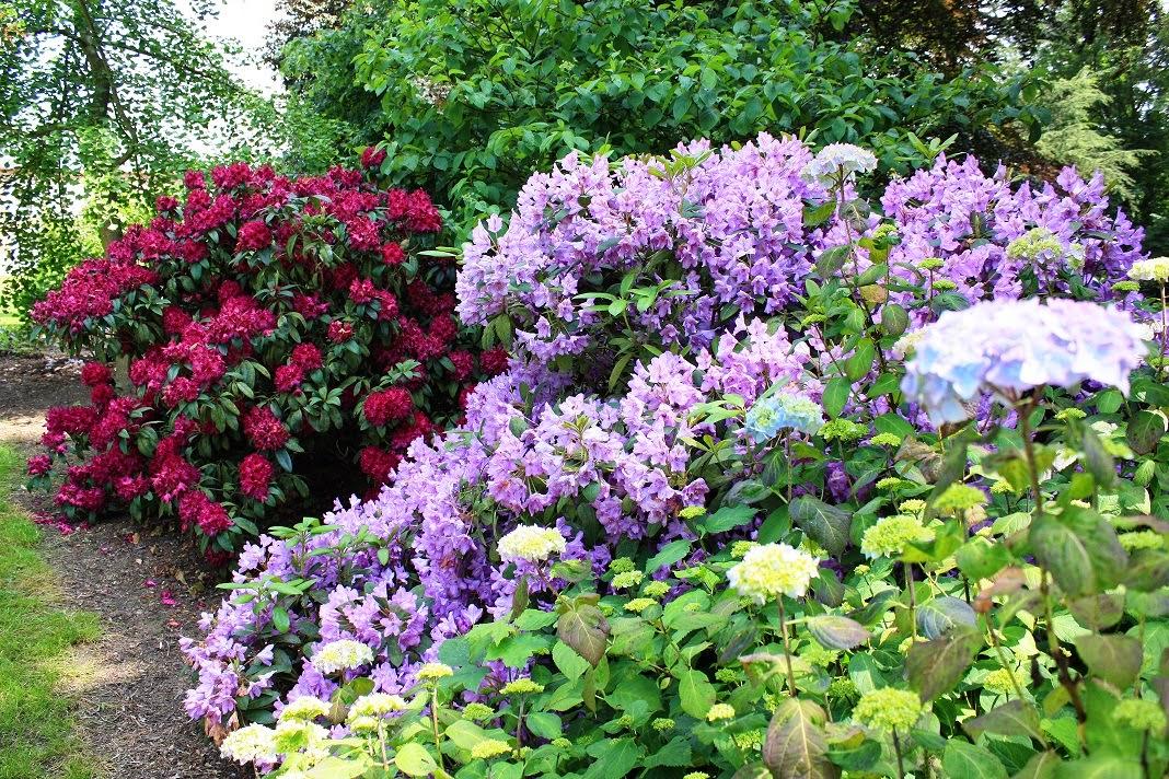 Mon jardin dans l\'Aisne