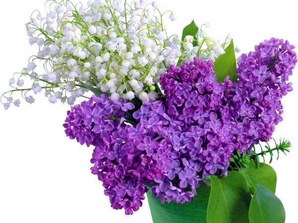 Beautiful Flowers in purple