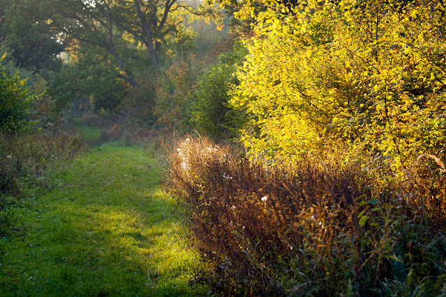 Colourful woodland in the afternoon sun in Cambridgeshire