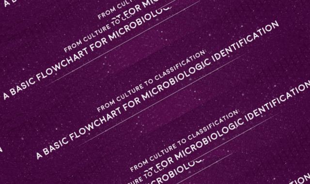 A Basic Flowchart For Microbiologic Identification