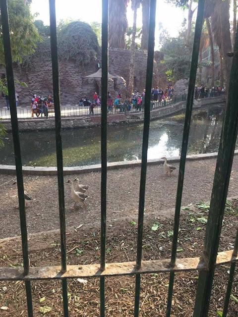 إقفلوا حديقة الحيوان في الجيزة بسرعة!!! 26730591_1600140713399335_8223691283124722872_n