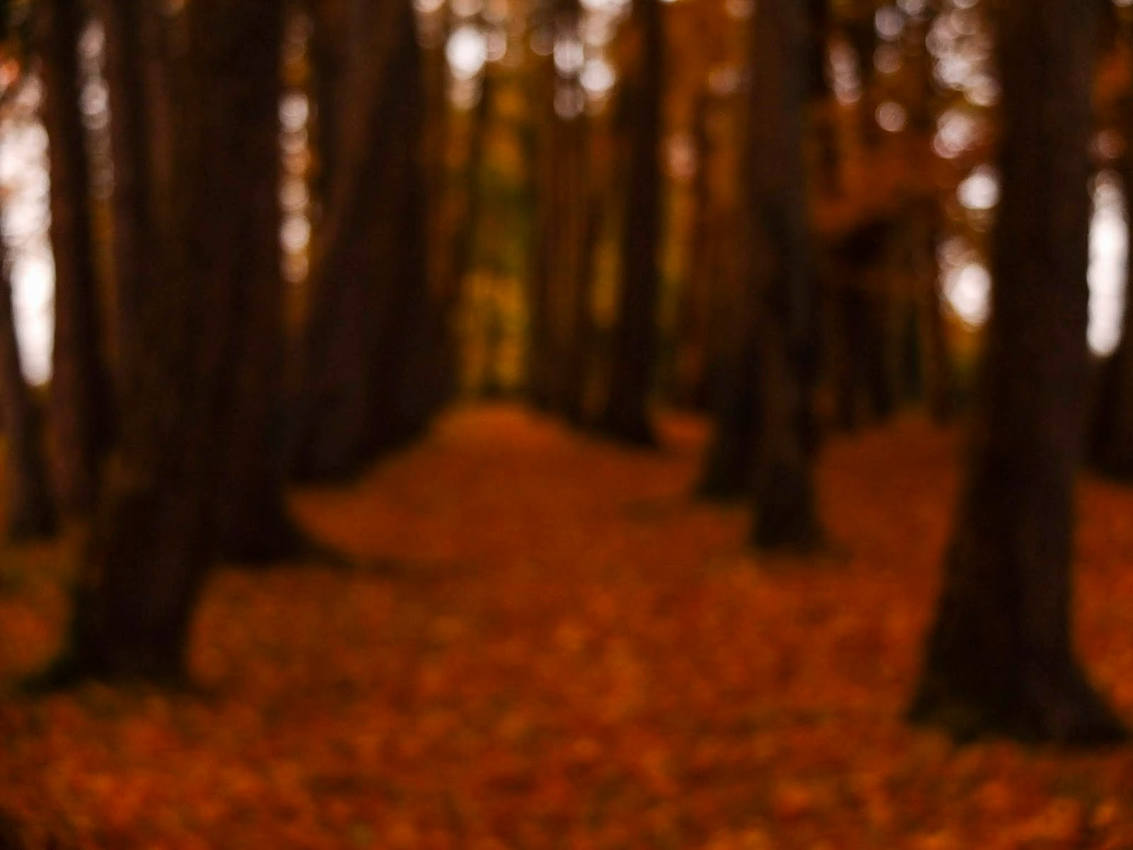 A blurry image of a forest path covered in brown autumn leaves in North Cork.