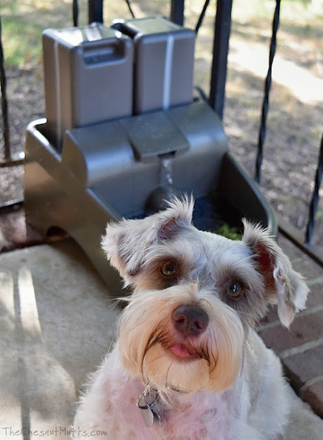 Dottie and her PetSafe Drinkwell Water Fountains for Dogs and Cats