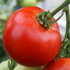 khasiat-dan-manfaat-buah-tomat-untuk-kesehatan