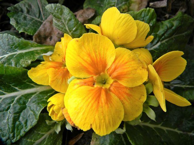 kwiat, zima, żółty, przyroda