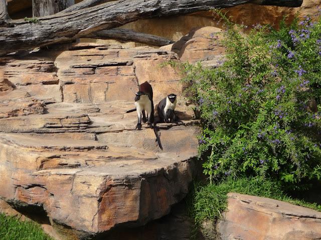 A Trip To The Zoo | Bioparc Fuengirola 14