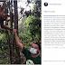 Leonardo DiCaprio é ameaçado de deportação após criticar desmatamento