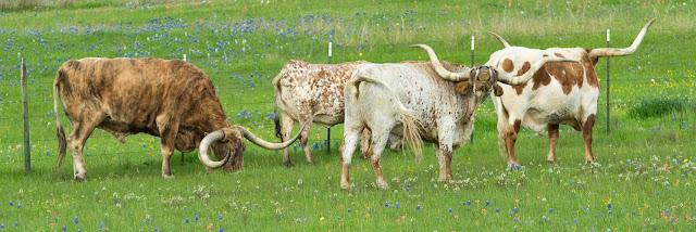 Texas Longhorns, Union Hill Road