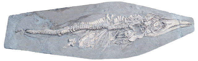 Prehistoric squid was last meal of newborn ichthyosaur 200 million years ago