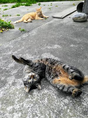マメ(猫)ときな粉(猫)