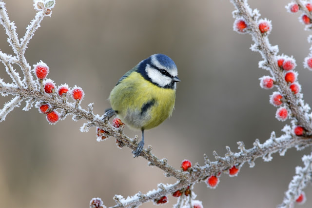 vogels winter