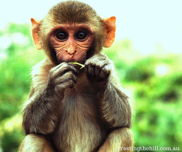 """How the simple sentence """"don't pick up the monkey"""" changed my stress levels"""