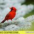 ¿Qué sucedería si las aves desaparecieran?
