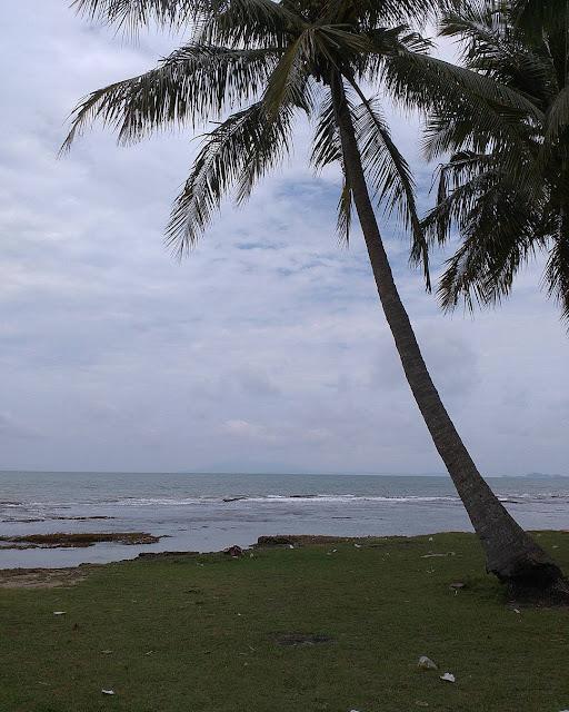 foto pohon kelapa di pinggir pantai anyer