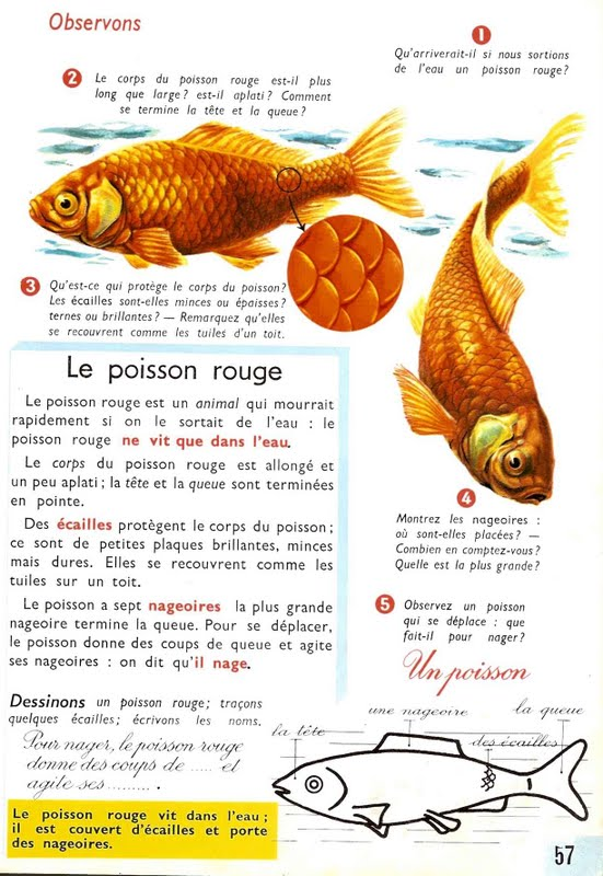 Le ons de choses le poisson rouge for L alimentation du poisson rouge
