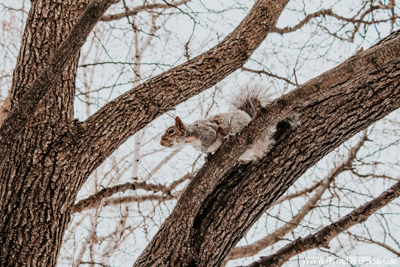 Squirrels in a park in Niagara Falls, New York!
