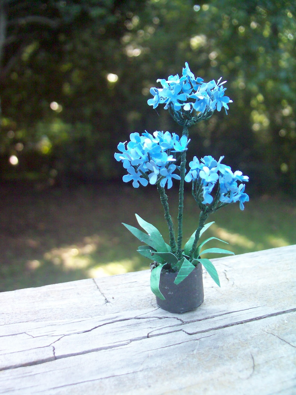 Beautiful Mini Blessings A Is For Agapanthus