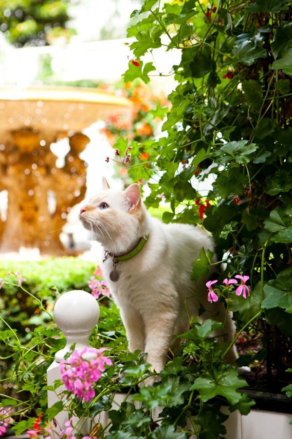 bristol cat