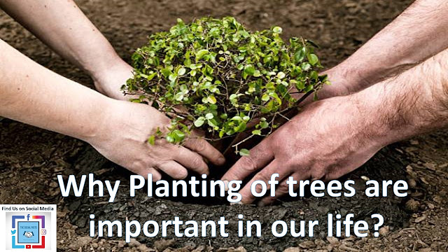 planting of trees are important in our life
