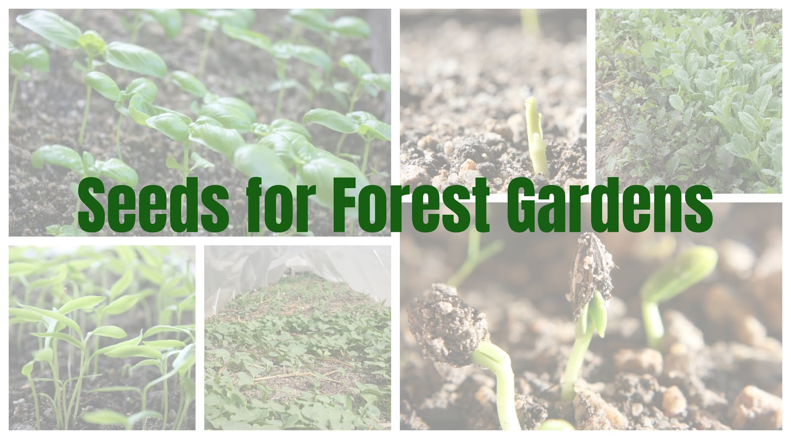 Seeds For Forest Gardens