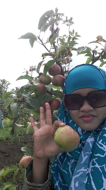 Wisata petik apel Malang Kota Batu Jawa Timur
