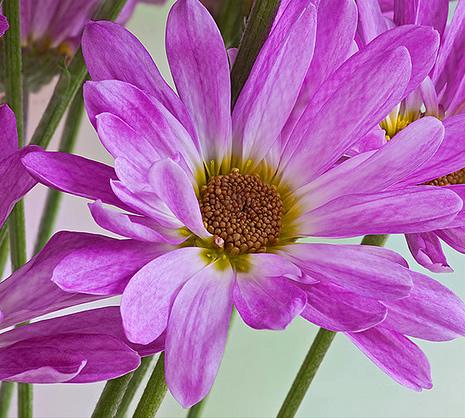 Flowering regulation