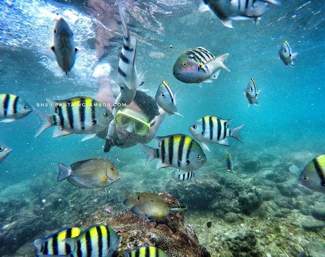Pantai Nglambor, Spot Terbaik Untuk Snorkeling di Jogja
