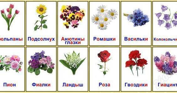 Картинки цветов садовых с названиями, день рождения отправить