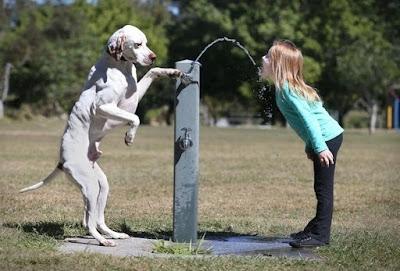 cane che dà dell'acqua ad una piccola ragazza