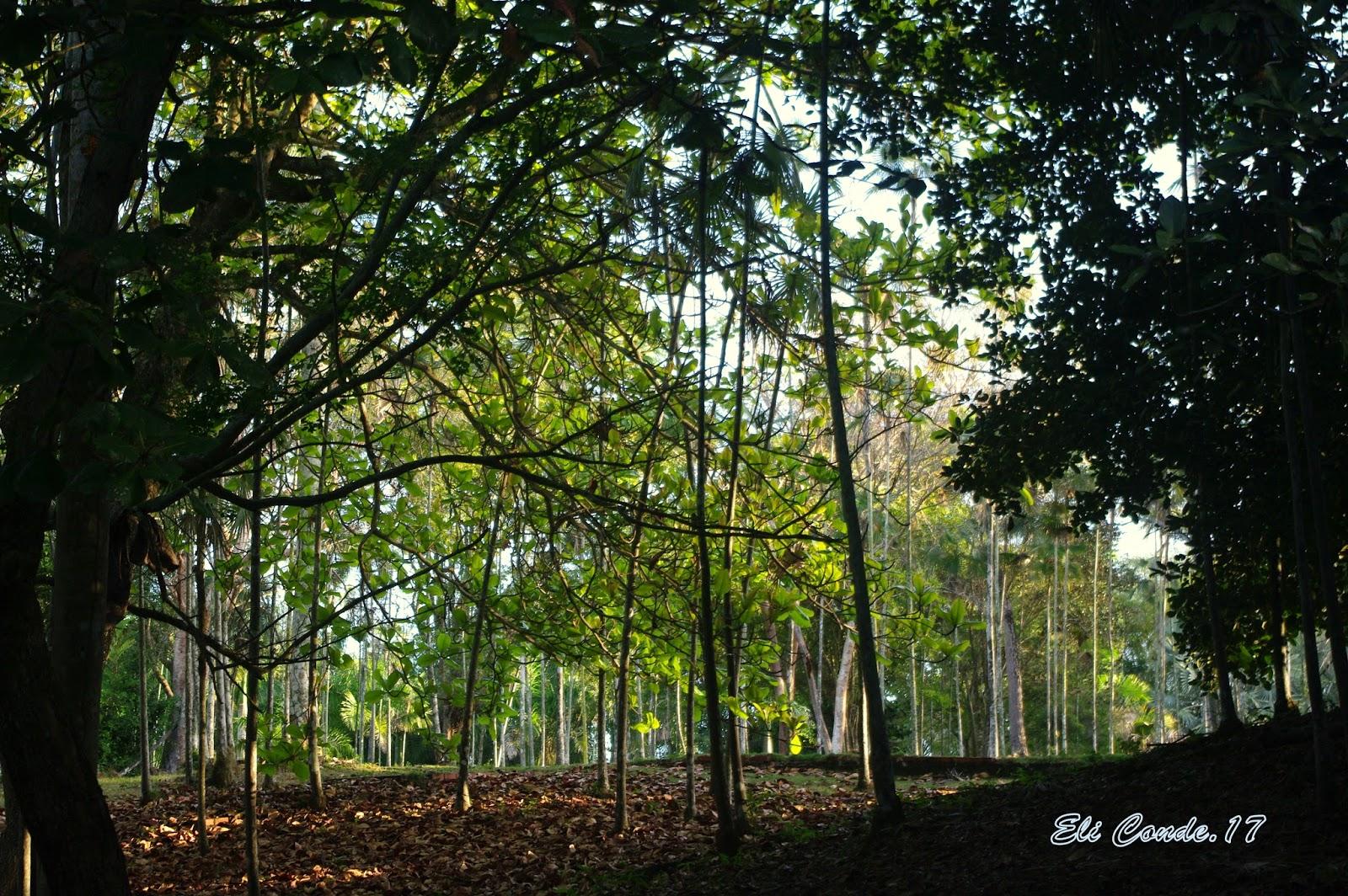 Con ojos curiosos en rep dominicana paseando por el for Conciertos jardin botanico 2017