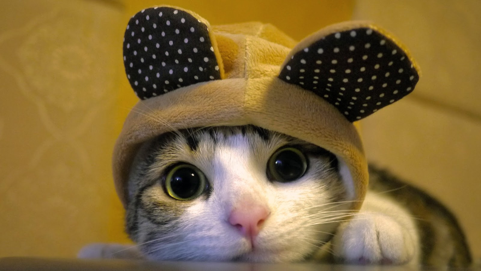 Kitapl k faresi may s 2013 - Cute kittens hd images ...