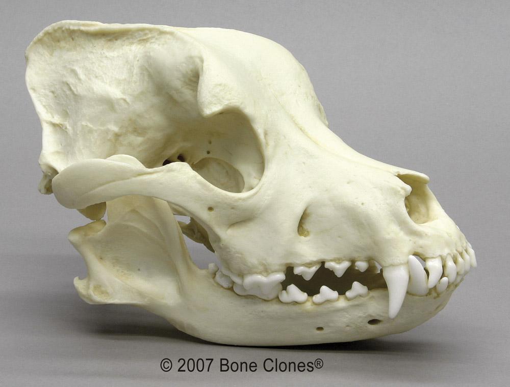 Terriermans Daily Dose Skulls In Juxtaposition