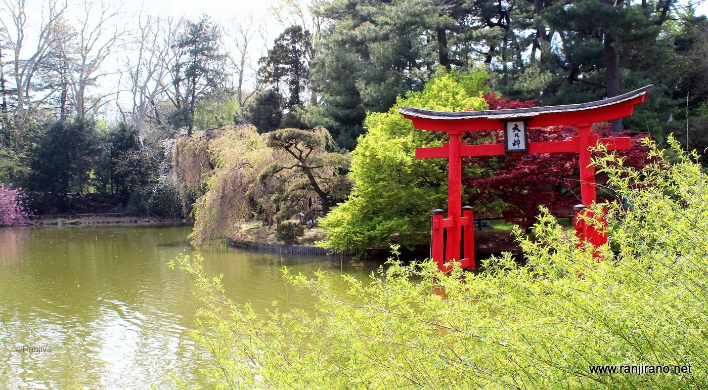 Exceptionnel Un jardin japonais à New-York [Brooklyn Botanic Garden  YK71