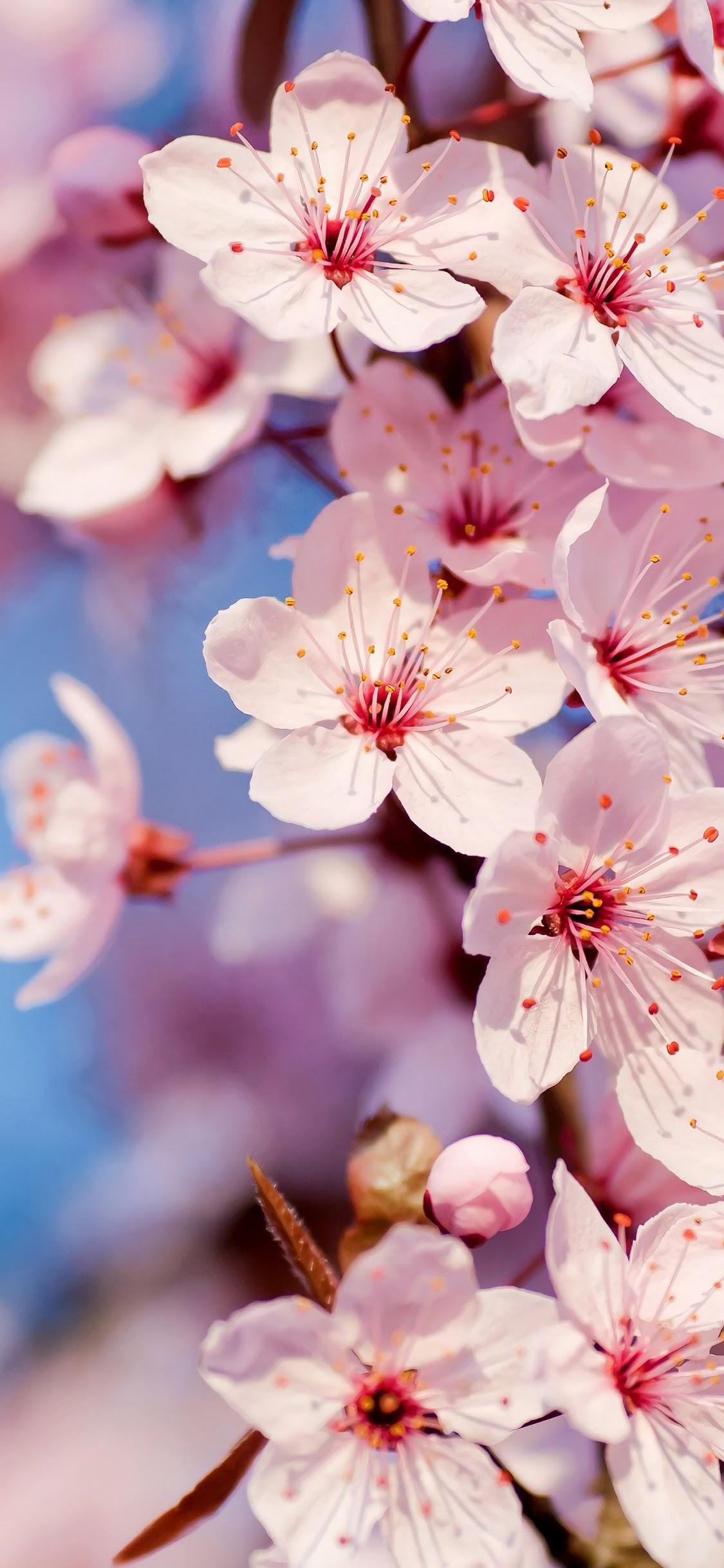 White Flower Nature 4k Wallpaper 94