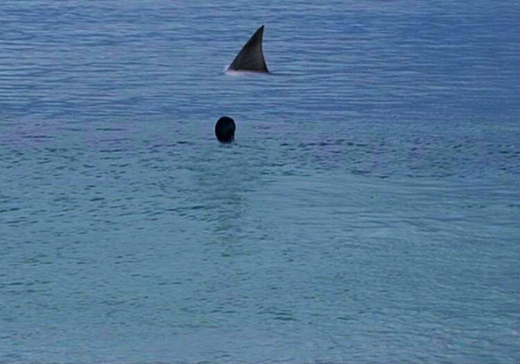 Köpek balıklarıyla yüzen adam olarak da arkadaşları arasında şaka konusu ediliyordu.