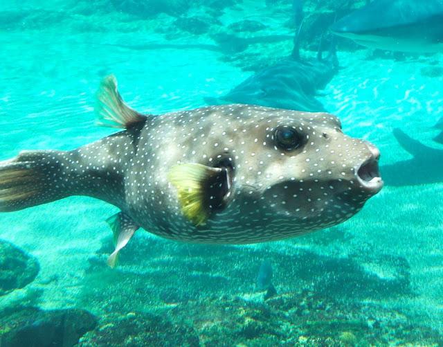 Sea World Tropical Fish