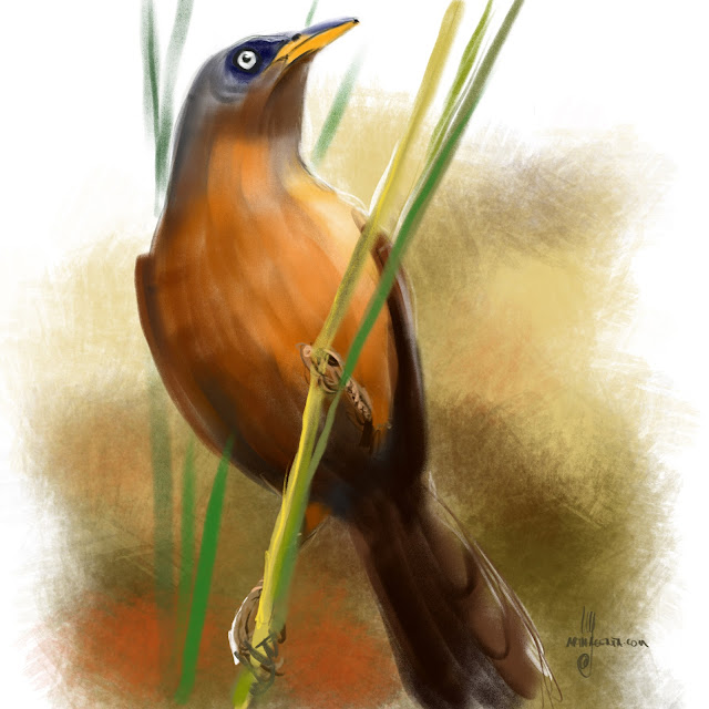 Rufous babbler bird painting by Artmagenta