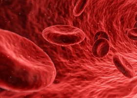 Picture of red blood cells transporting oxygen.
