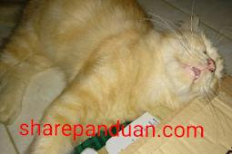 Gembul, Kucing Kesayangan Kita Berdua dan Keluarga