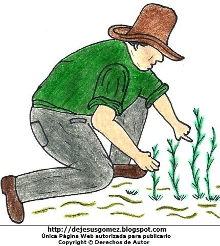 Dibujo de un campesino trabajando por el Día del Campesino  (Hombre campesino sembrando plantas). Dibujo del campesino hecho por Jesus Gómez