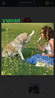 умная собака лапой ударяет по ладони девушки на поляне