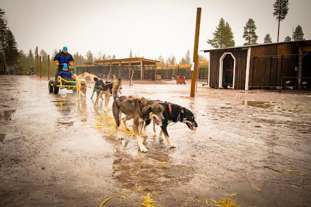 Bearhill husky-Slitta trainata dai cani-Rovaniemi