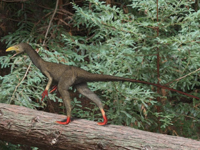Sinocalliopteryx