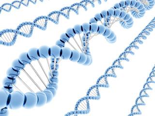 genetik risk